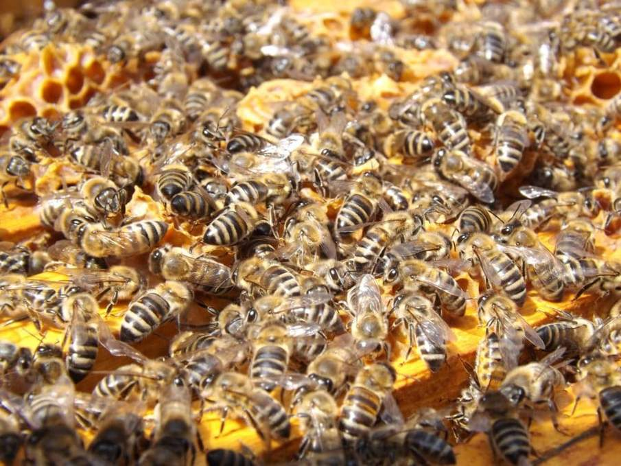 Bees are incredible insects